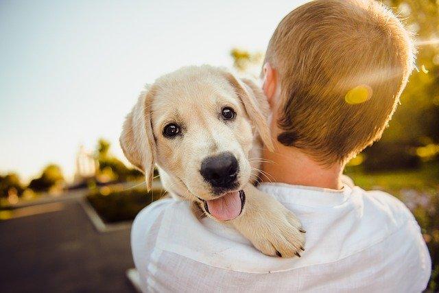 peluqueria canina a domicilio en Guareña