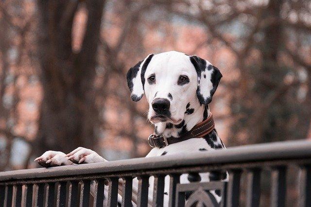 peluqueria canina a domicilio en Alborea