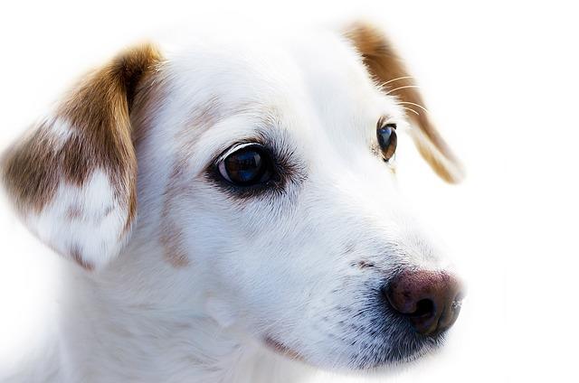 peluqueria canina a domicilio en Formentera del Segura
