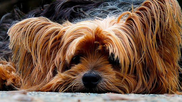 peluqueria canina a domicilio en Tineo
