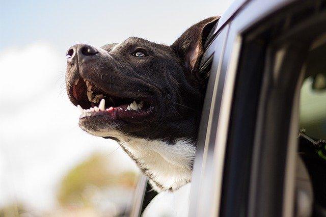 peluqueria canina a domicilio en Corcubión