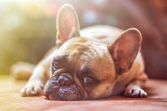 peluqueria canina a domicilio en Bonete
