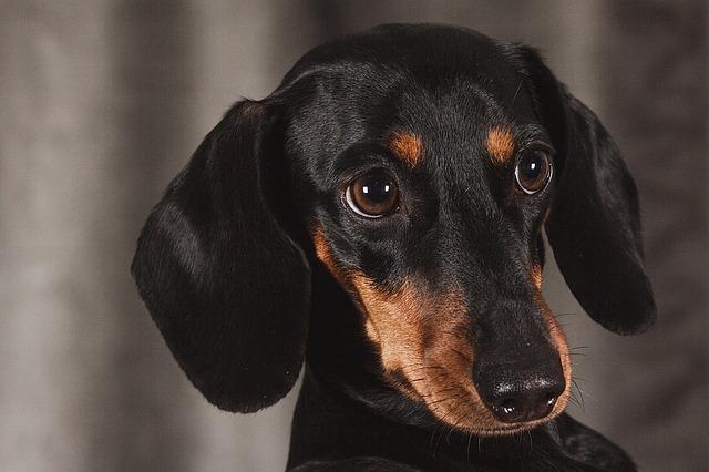 peluqueria canina a domicilio en Fuengirola