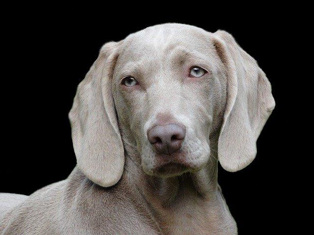 peluqueria canina a domicilio en Las Tres Villas