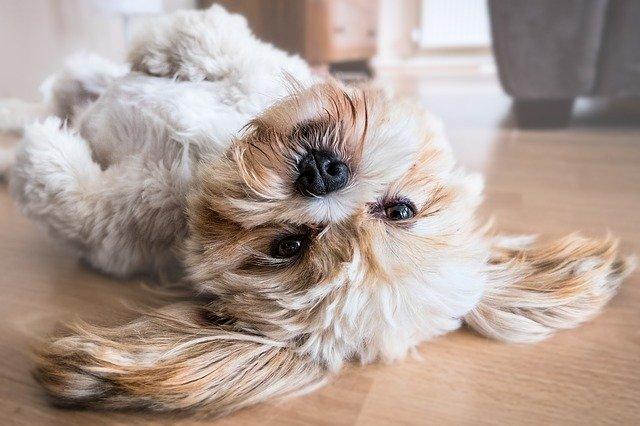 peluqueria canina a domicilio en Almería