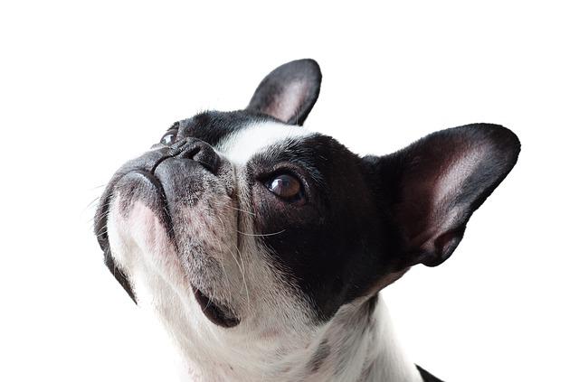 peluqueria canina a domicilio en Illas