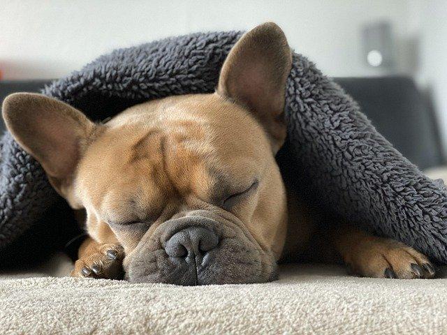 peluqueria canina a domicilio en Valdetorres