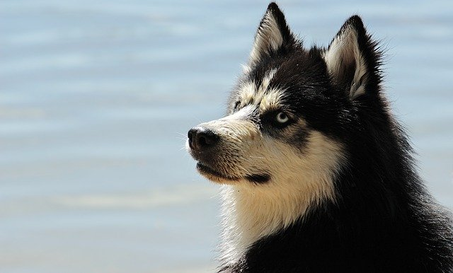 peluqueria canina a domicilio en Usagre