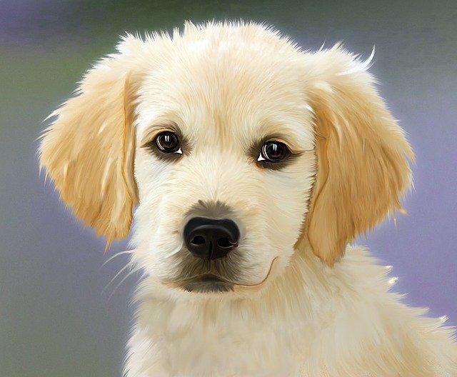 peluqueria canina a domicilio en Balsa de Ves
