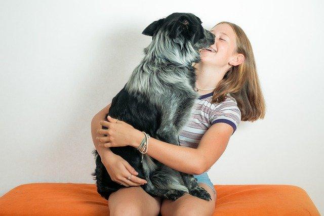 veterinario 24 horas en Alange
