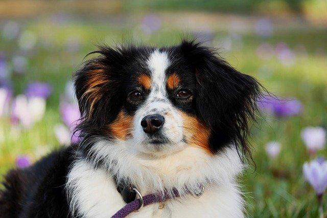 peluqueria canina a domicilio en Parla