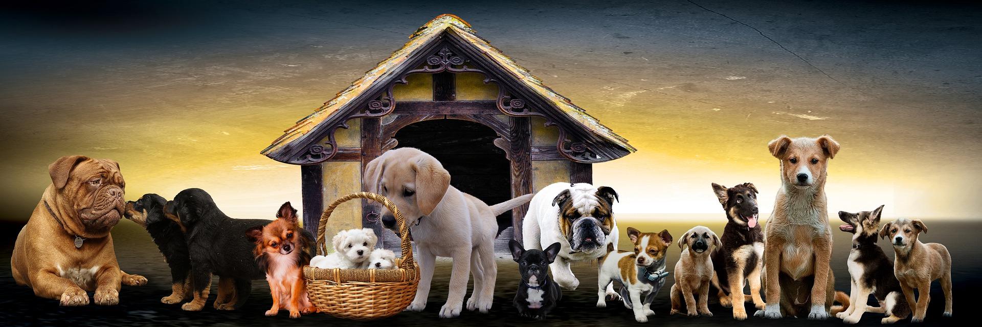 peluqueria canina a domicilio en La Carolina