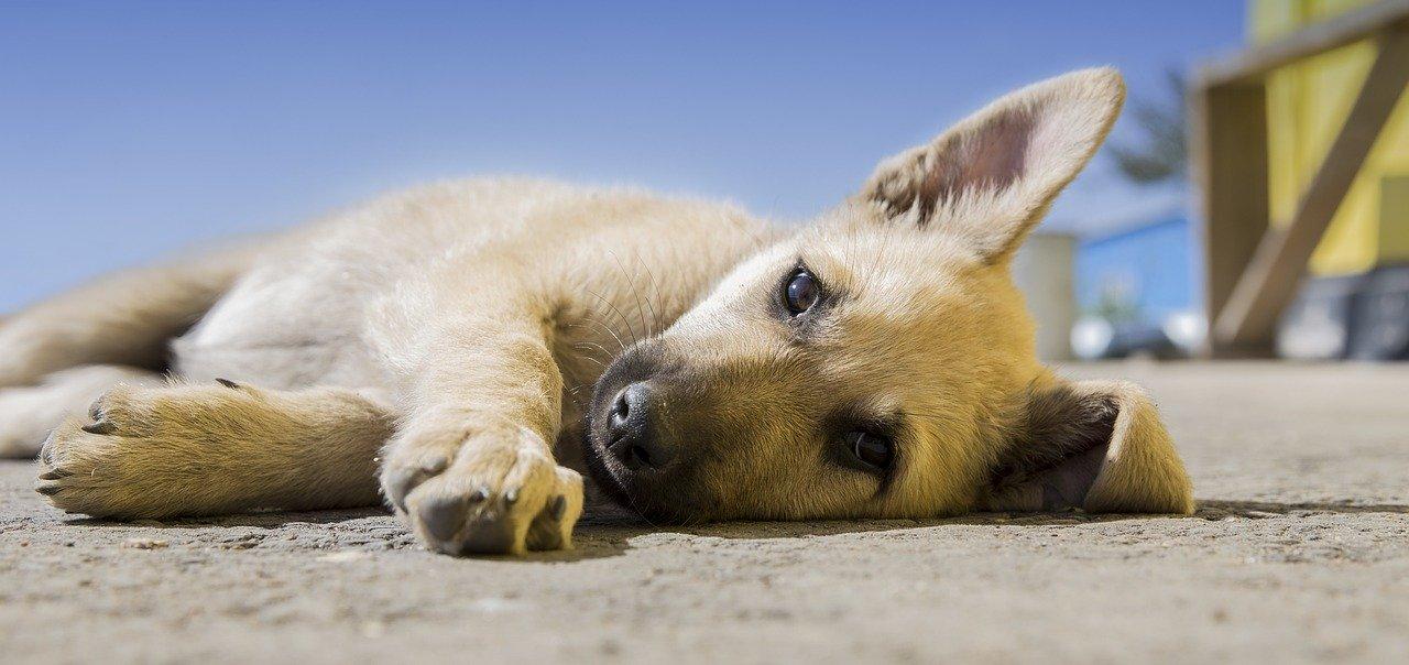 peluqueria canina a domicilio en Montijo