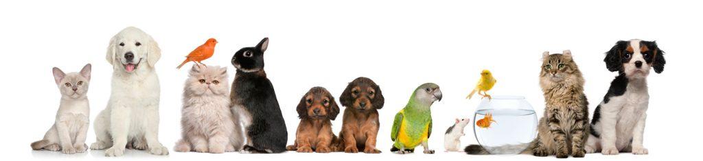 Peluquería canina a domicilio en Olivella