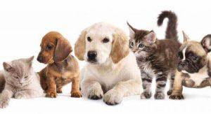 profesionales veterinarios