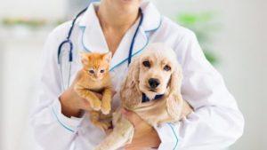 veterinario-24-horas