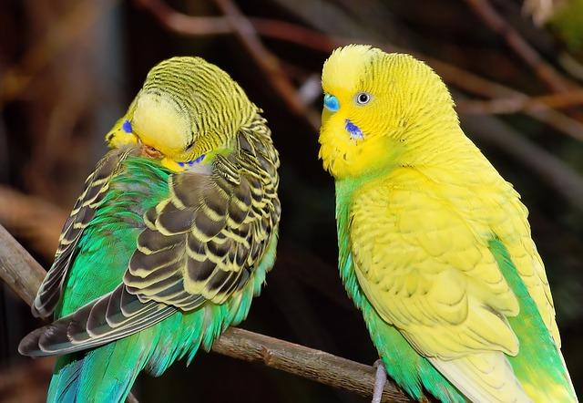 veterinario animales exoticos en Ripollet