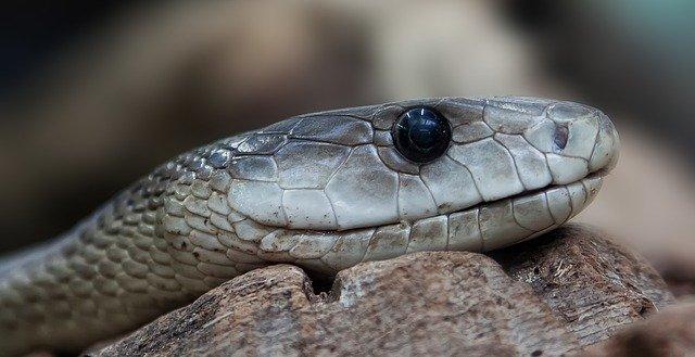veterinario animales exoticos en Hondón de los Frailes