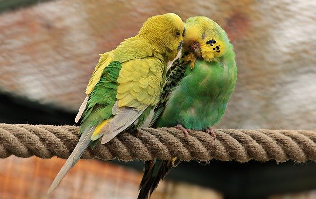 veterinario animales exoticos en Casillas
