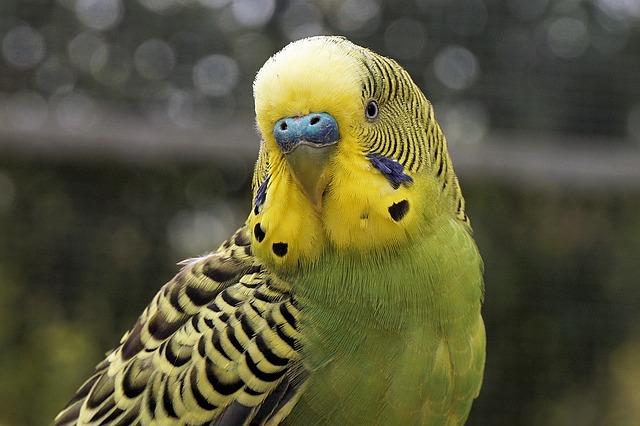 veterinario animales exoticos en Pozohondo