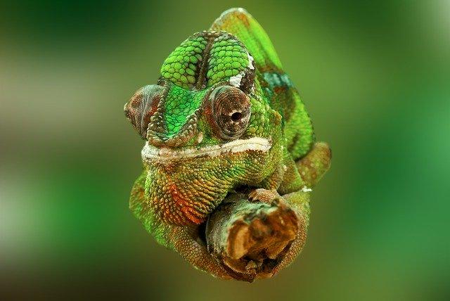 veterinario animales exoticos en Cabeza del Buey