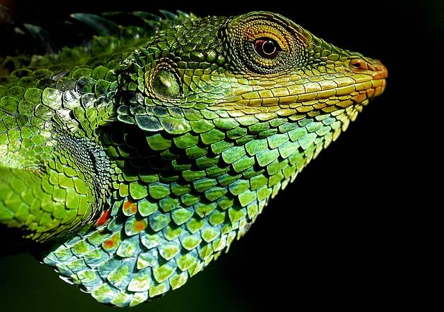 veterinario animales exoticos en San Juan de la Encinilla