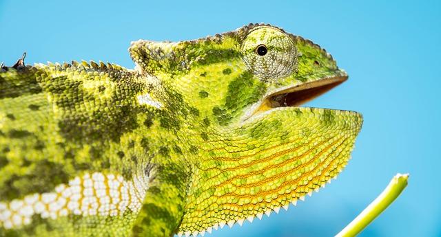 veterinario animales exoticos en Maguilla