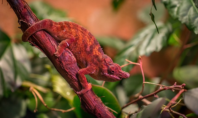 veterinario animales exoticos en Belascoáin