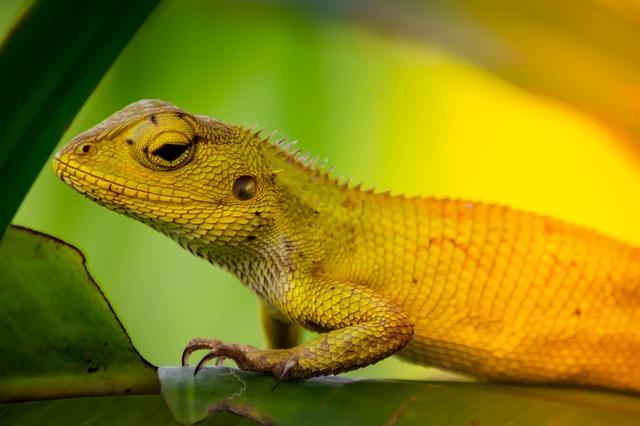 veterinario animales exoticos en Cabrils