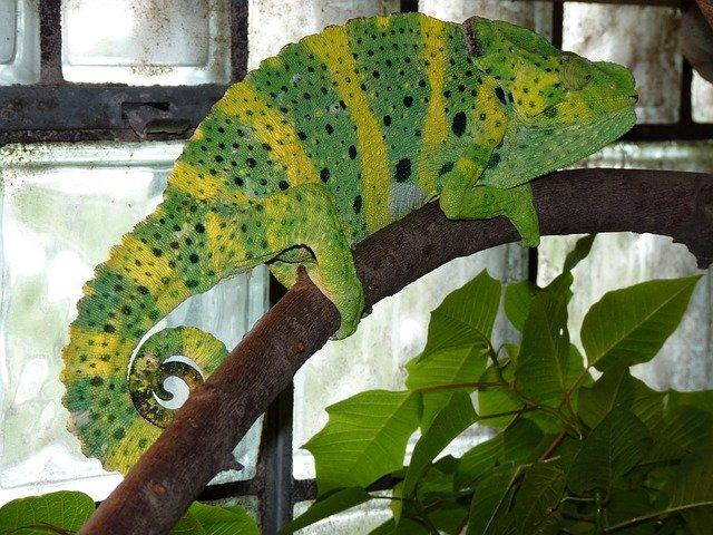 veterinario animales exoticos en Rubí