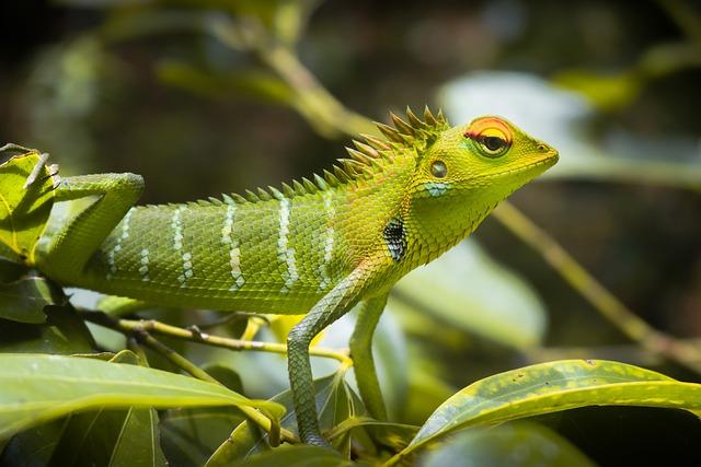 veterinario animales exoticos en Ribera del Fresno