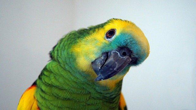 veterinario animales exoticos en Alcalá del Júcar