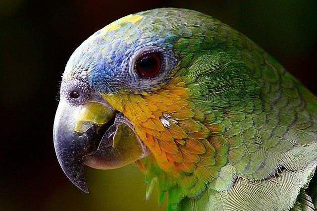 veterinario animales exoticos en Cangas de Onís