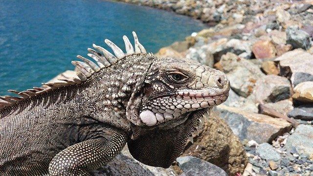 veterinario animales exoticos en Piloña