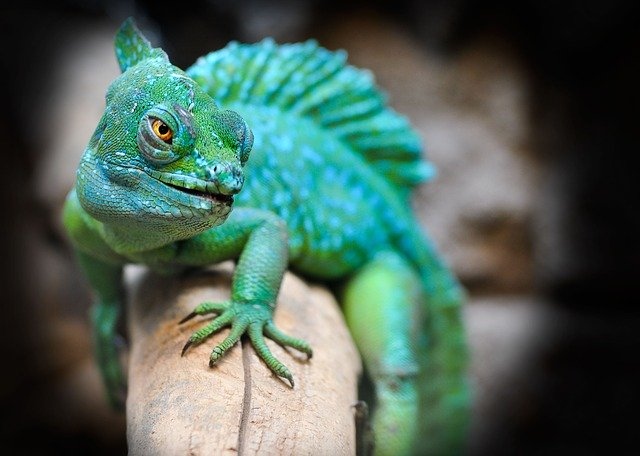 veterinario animales exoticos en Asparrena