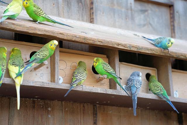 veterinario animales exoticos en Allande