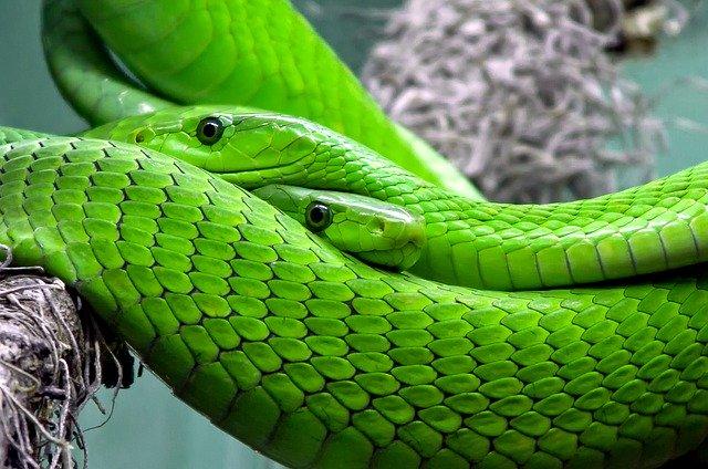 veterinario animales exoticos en Gallegos de Altamiros