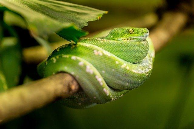veterinario animales exoticos en Casasola